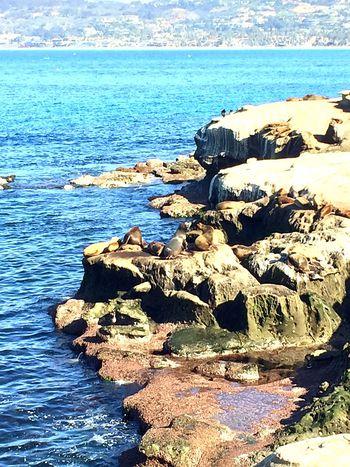 LaJolla seals Hello World Enjoying Life Seals Nature Collection Beautiful Animals  Beach Sandiego_ca Sea