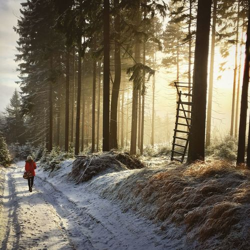Goldentouch No Filter Nature Natural Beauty Gold Forest Sunrise Tranquility Travel Girl Beauty In Nature Winter December Fog Snow Weather Nature Picoftheday Traveling Home For The Holidays The Great Outdoors - 2017 EyeEm Awards