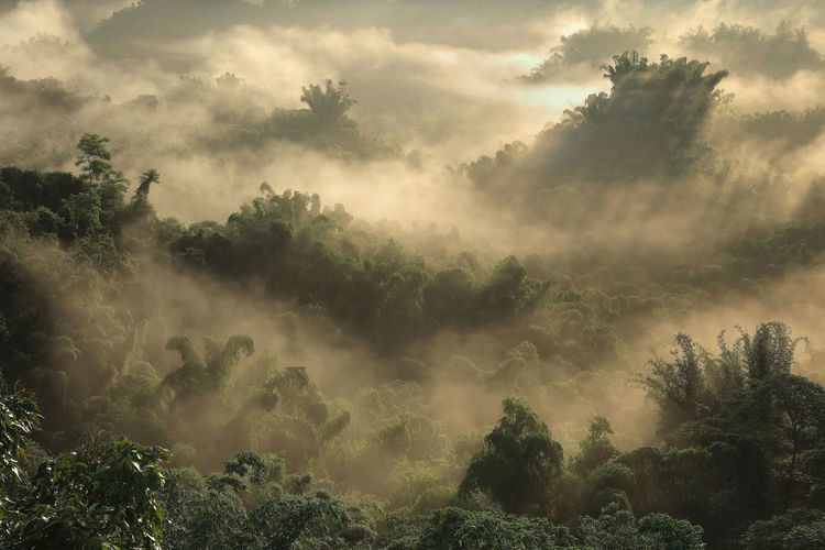 Tree Plant Beauty In Nature Tranquility Tranquil Scene Scenics - Nature Cloud - Sky Fog Nature Sky Land No People Non-urban Scene Day Growth Forest Environment Idyllic Outdoors Hazy  Tainan, Erqi, Sunrise