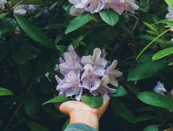 flowers in hand Blooming Blossom Spring Season  Flowers Purple Hand Leaf Garden Natural Beautiful Colorful Springtime Outdoors Change Summer Human Hand Flower Leaf Personal Perspective Holding Close-up Plant Blooming Petal In Bloom Stamen Pollen