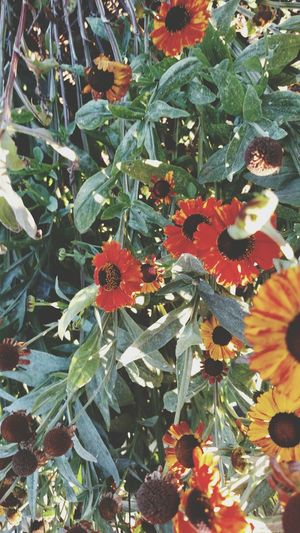 Downbythebay Boulevard Flowers 🌷 Flowers 🌹 Flowerporn Flowerpower Flowerpower🌸