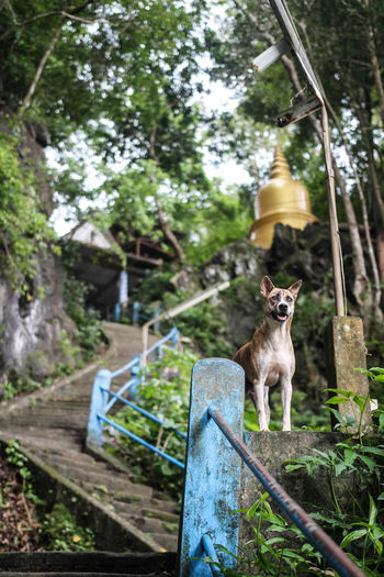 Stray dog near a temple in Krabi Town. ASIA Backpacking Krabi Thailand Travel Travel Photography Asien Backpack Dog Mammal No People One Animal Plant Portrait Tiger Cave Temple, Krabi Tree