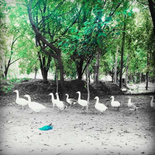 editing effect Hi! Check This Out Nature Photography Staycalm First Eyeem Photo Myperfectcapture Gaggle Solace Gwalior
