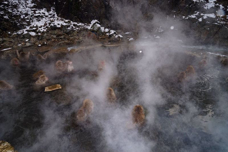 High Angle View Of Monkeys In Hot Spring During Winter