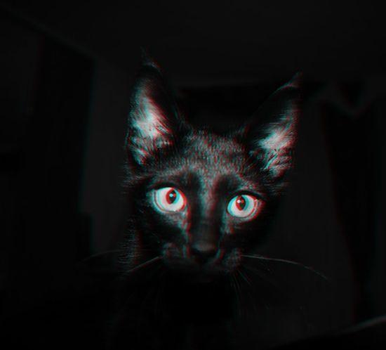 Swag DOPE Cat Black & White