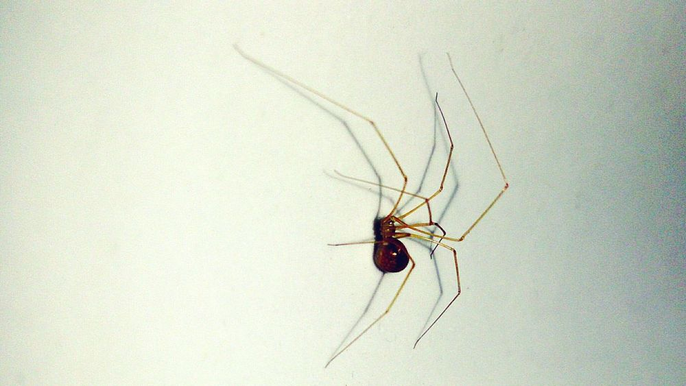 Nature Insect Spider Macroshot Closeup Attacking Position Action Wall