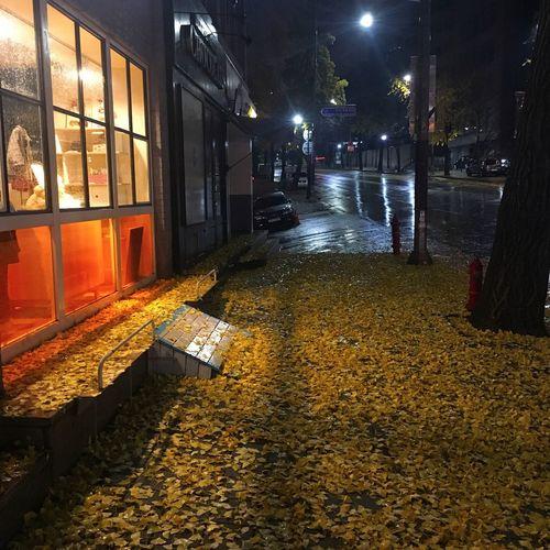 After The Rain Autumn Rain Heavy Rain Ginko Leaves Yellow Yellow Leaves Yellow Ground All Yellow Winter Is Near