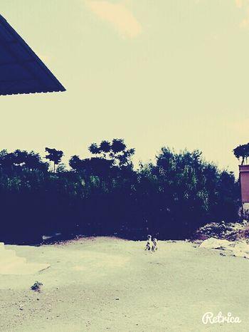 Mersin Dogs Palms