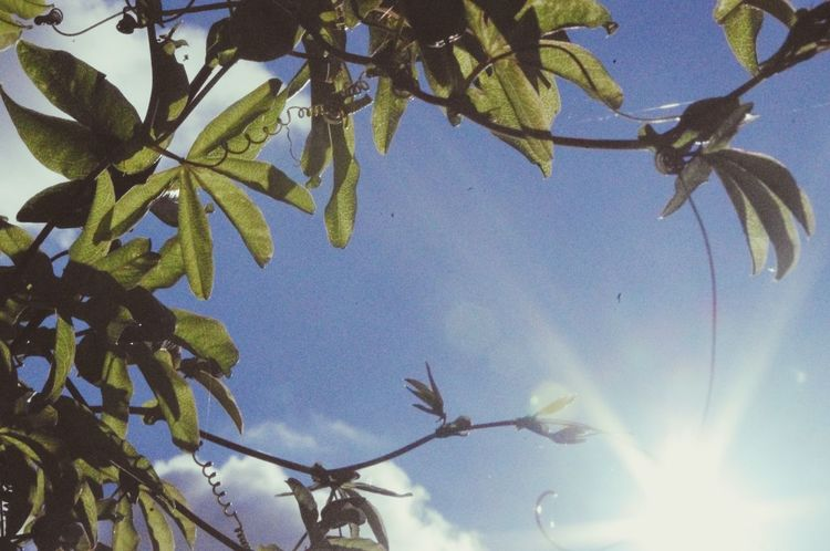Sun Leaves Blue Sky Getting Inspired Soaking Up The Sun EyeEm Nature Lover