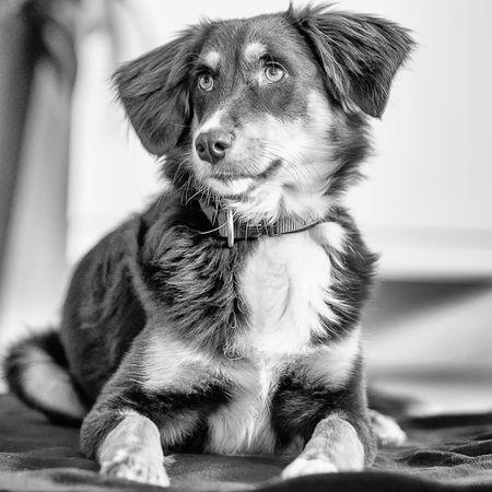 MAJA Animal Portrait Animal Themes Black And White Blackandwhite Blackandwhite Photography Close-up Dog Domestic Animals One Animal Pets