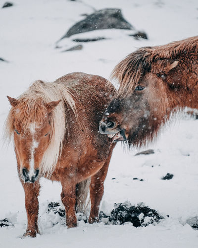 View of animal on snow covered land