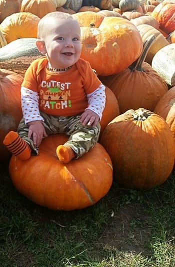 cutest pumpkin in the patch Baby Little Boy Grass Orange Color Halloween Pumpkin Squash - Vegetable Jack O' Lantern Autumn Childhood Vegetable Cute Agriculture Baby Jack O Lantern Harvesting Vegetable Garden Picking