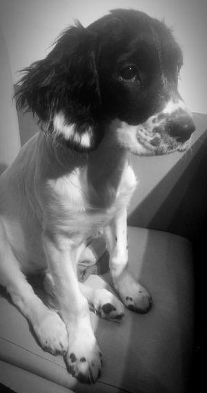 Last one i swear.? Taking Photos Enjoying Life Cheese! Dog I Love My Dog Blackandwhite Photography