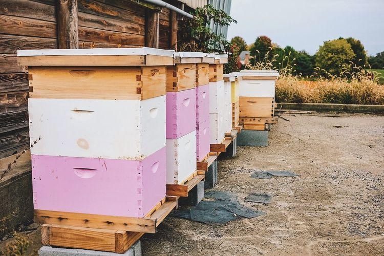 Apiary Bees Day Farm Health Healthy High Angle View Honey HoneyBee Old Wood Wood - Material Wooden