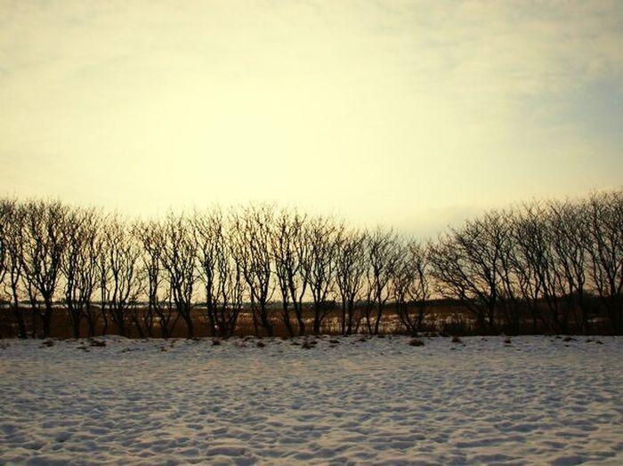 Winter Snow Naked Trees Horison Sky Contrast