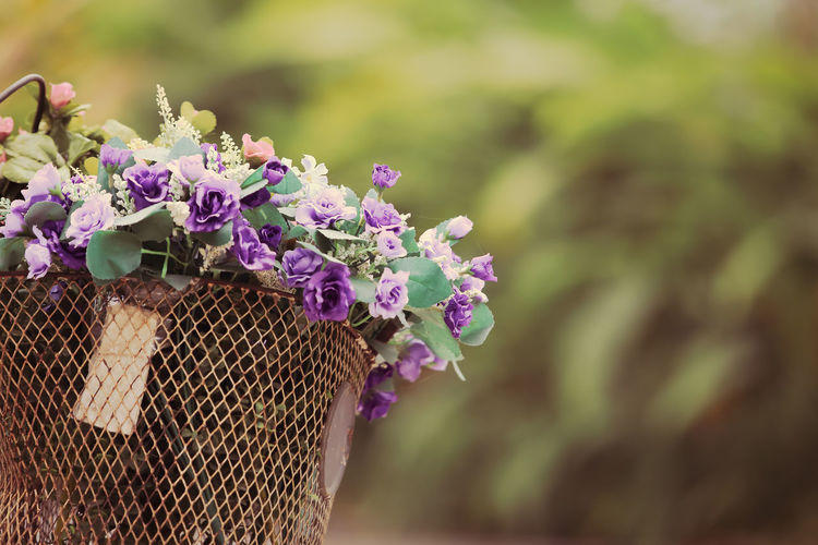 Animal Themes Beauty In Nature Close-up Day Flower Flower Head Flowering Plant Focus On Foreground Fragility Freshness Growth Inflorescence Lilac Nature No People Outdoors Petal Pink Color Plant Purple Vulnerability