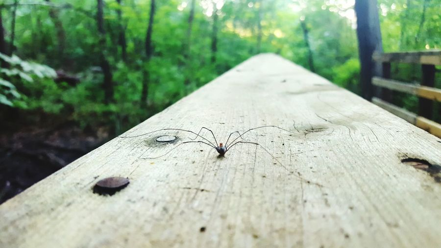 i didnt notice this spider on the wood untill i focused in lol Tree Tree Trunk Wood - Material Close-up Forest Selective Focus Cracked Wooden Focus On Foreground Nature Growth Branch Surface Level Day Tranquil Scene Non-urban Scene Diminishing Perspective Tranquility Remote WoodLand Spider Spiders Tree Spider Wood Spider
