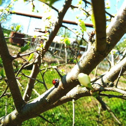 лето божья коровка майские дачка Summer Ladybird Happiness Sunny