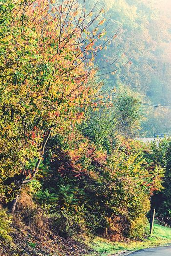 Eye Em Nature Lover Autumn Autumn🍁🍁🍁 Autumn Colors Foggy Day Fog Foggy Landscape Landscape Nature No People Tree Beauty In Nature Sky Growth Close-up Day Outdoors Water Backgrounds