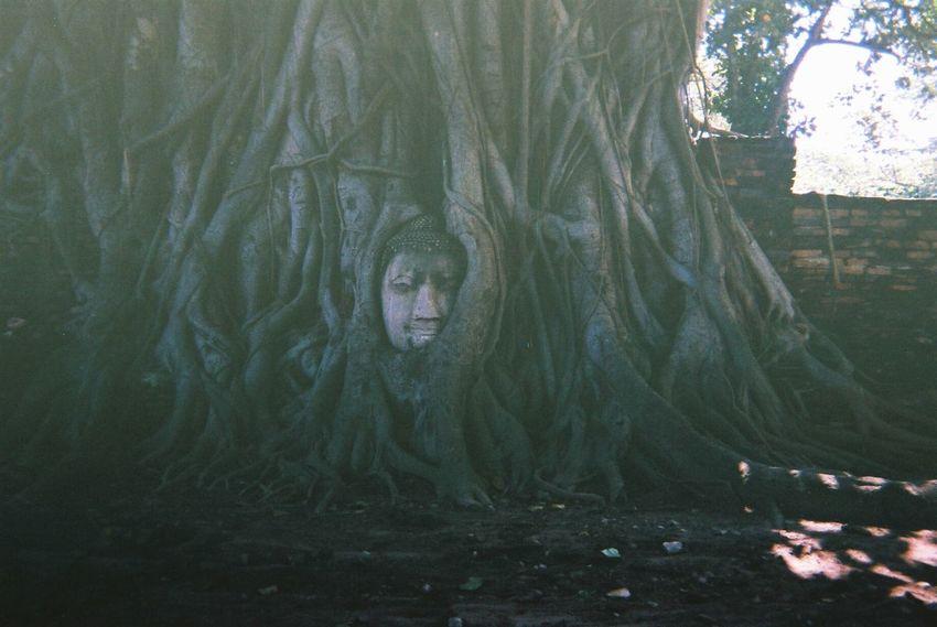 写ルンです Watmahathat Film Thailand Photography First Eyeem Photo