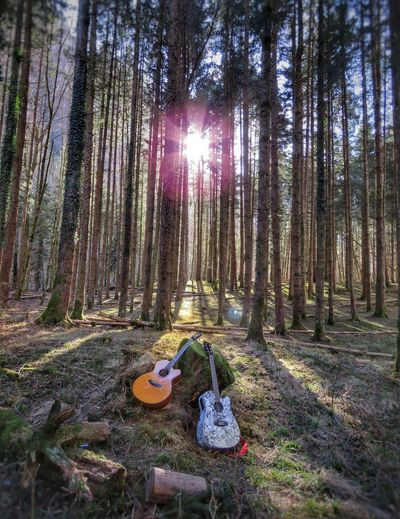 Peaceful Guitar Outdoors Mountain Music Musical Instrument Tree Forest Sky Tree Trunk Plant Bark Treelined Fallen Tree Woods WoodLand Sunbeam Pathway