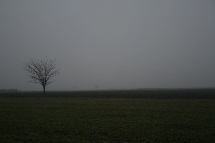 fog Agriculture Bare Tree Beauty In Nature Clear Sky Day Field Fog Foggy Landscape Foggy Weather Landscape Nature No People Outdoors Rural Scene Scenics Sky Tranquil Scene Tranquility Tree