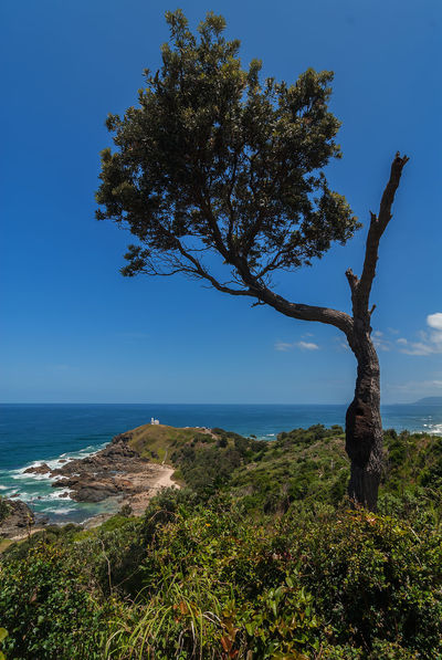 Tacking Point Lighthouse Australia Beauty In Nature Blue Branch Clear Sky Day Growth Horizon Over Water Landscape Nature No People Nsw Outdoors Port Macquarie Scenics Sea Sky Tacking Point Lighthouse Tranquil Scene Tranquility Tree Tree Trunk Water