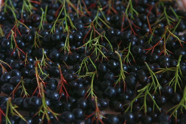 Aronia Aronia Berries Black Chokeberry Berries Harvest Autumn Рябина черноплодная арония ягоды урожай осень