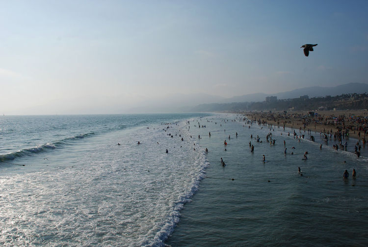 Day on the beach Beach Beauty In Nature Bird Californiacoast Clear Sky Day Flying Horizon Over Water Large Group Of People Leisure Activity Lifestyles Nature Ocean Outdoors People Real People Santamonica Scenics Sea Sky Tranquil Scene Tranquility Vacations Water Wave