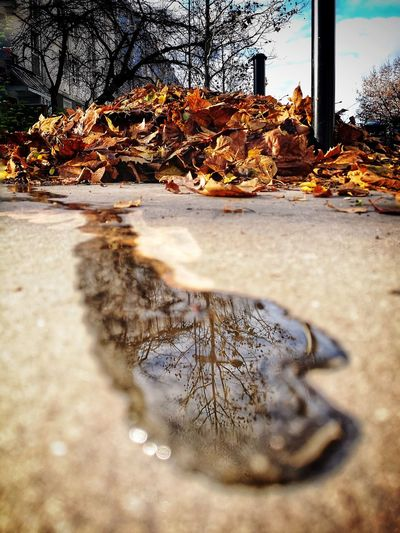 Coulée d'automne. Autumn Autumn colors Autumn Leaves autumn mood Tree Water Sky Close-up Puddle Rainy Season Reflection The Art Of Street Photography