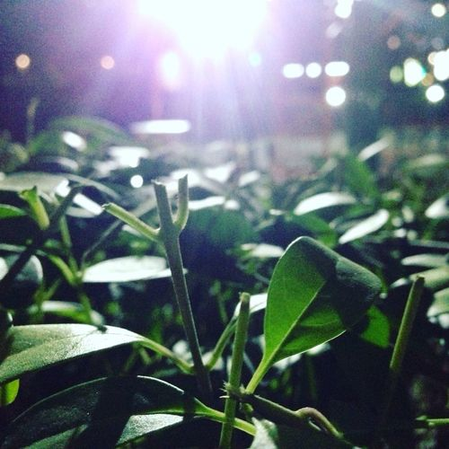 Midnight Photos in LakesPark Abu Dhabi Night Green Color Focus On Foreground Growth Close-up Indoors  No People Illuminated Freshness Nature