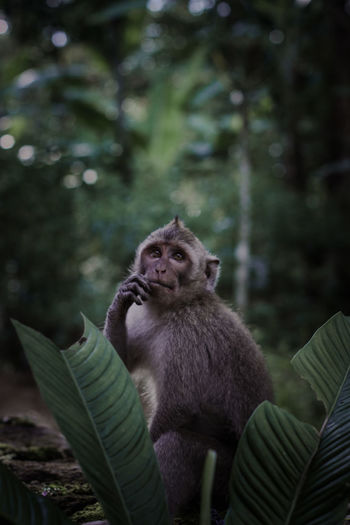 Portrait of monkey sitting in a forest