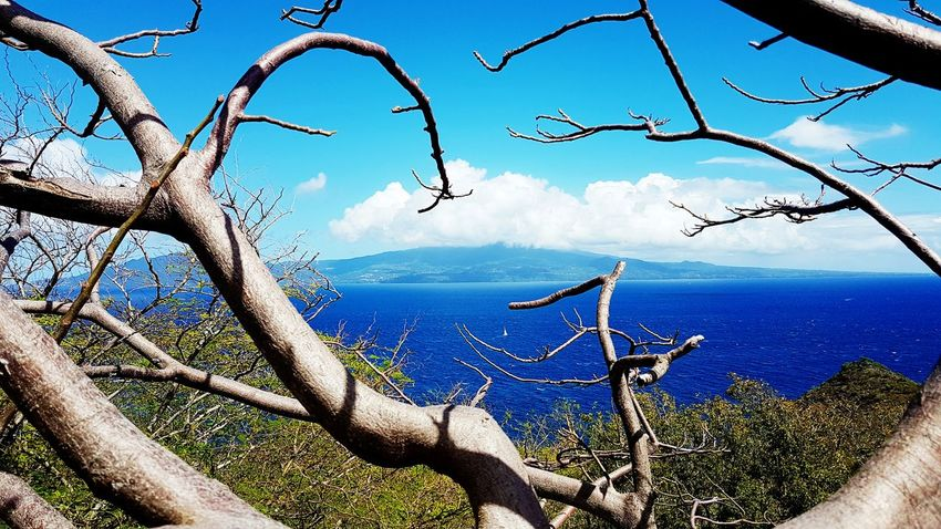 Sky Nature Tree Outdoors No People Sea Beauty In Nature Branch Water Tranquility Tropical Climate Tropiques Gwada  Gwadeloupe Guadeloupe Blue Island