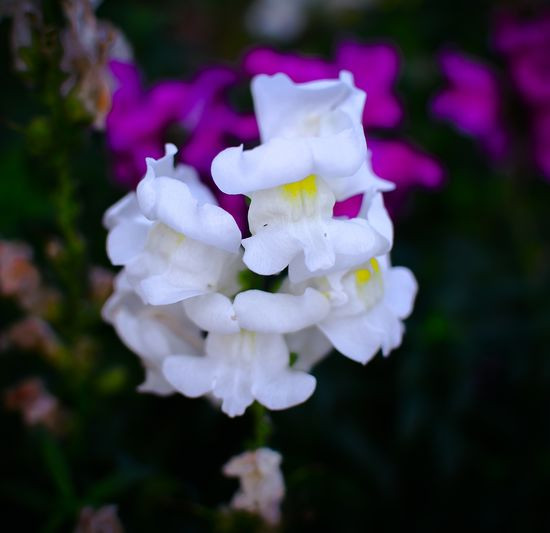 Dragon Morning Light Morning Close-up Flower Arts Culture And Entertainment Art Art Fine Art Photography Dragon Flower Petal Focus On Foreground White Color Nature Fragility Beauty In Nature Growth Plant Freshness Blooming Flower Head Close-up No People Outdoors Day
