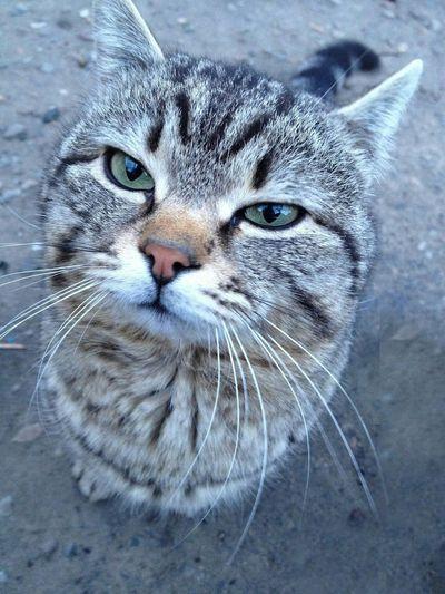Cat Cats Animals Cool Nice EyeEm Best Shots Enjoying Life Moment Sweet Friends