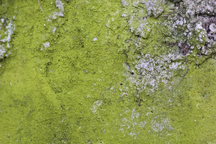 Backgrounds Beauty In Nature Green Color Lichens Natural Background Nature No People Outdoors
