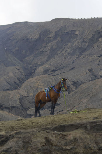 Horses on a land