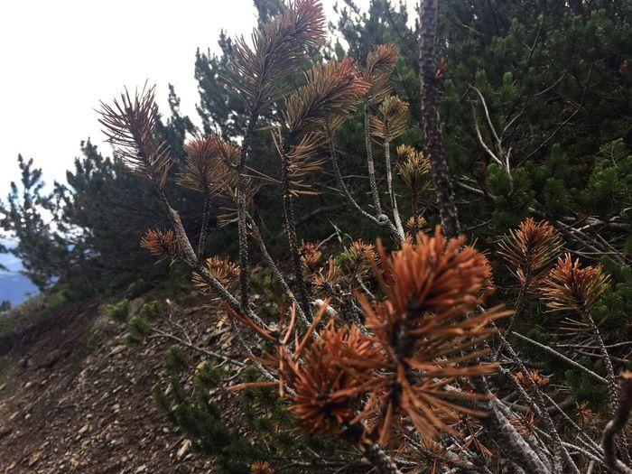 🇮🇹Italy/🇵🇪Austria (Border) ; 🍃random photo👌🏻😍 Nature Growth Outdoors Beauty In Nature