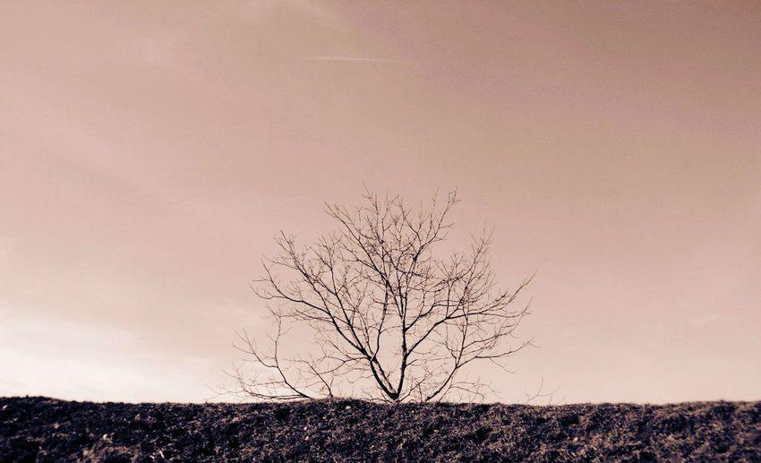 Tree Beauty Minimalism Monochrome Landscape