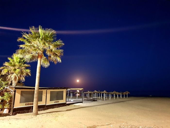 Palm trees on beach against sky at night