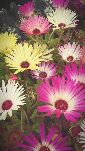 Flowers Sunny Days Flowers