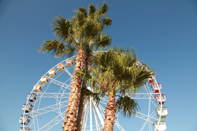 Amusement Park Cannes Fran Clear Sky Day Ferris Wheel No People Outdoors Palm Tree Sky Tree Vacations