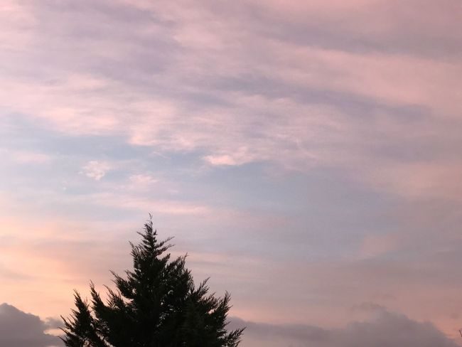 Sky Beauty In Nature Cloud - Sky Tranquility Treetop Pink Sky Nuages Natural Beauty Rosé