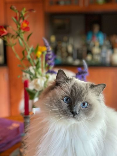 Portrait of a cat on hardwood floor