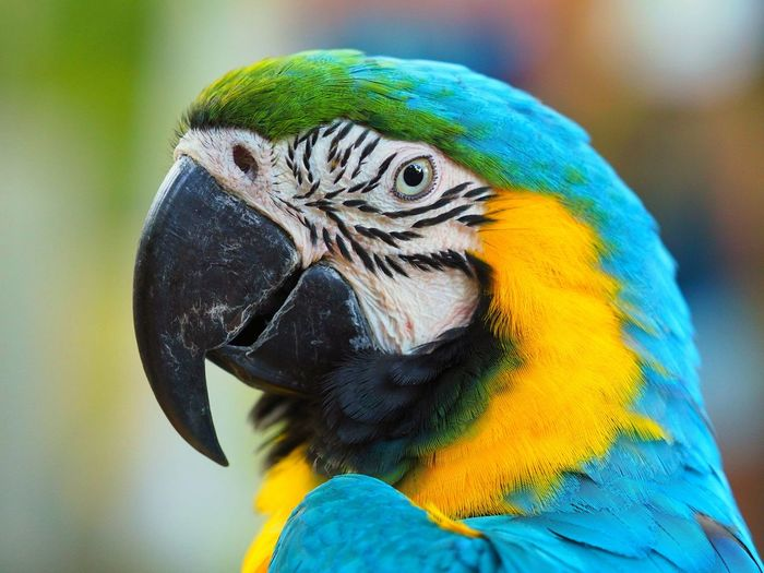 Animal Themes Animal Parrot Animal Wildlife Macaw Bird Vertebrate Beauty In Nature No People Animals In The Wild