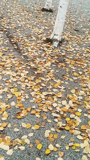 Autumn Colors Zurich, Switzerland Leaves Times Ticking