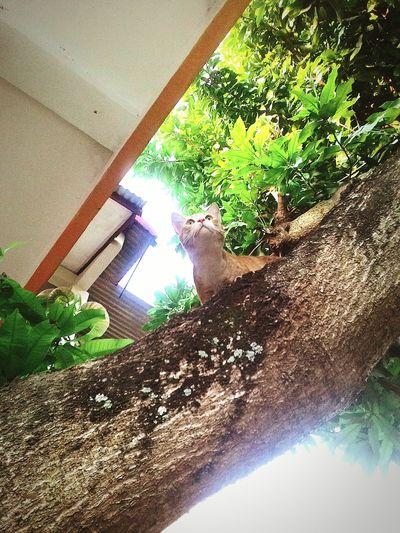 Hugging A Tree Enjoying The Sun Soaking Up The Sun Taking Photos Enjoying Life Eye Of The Tiger t