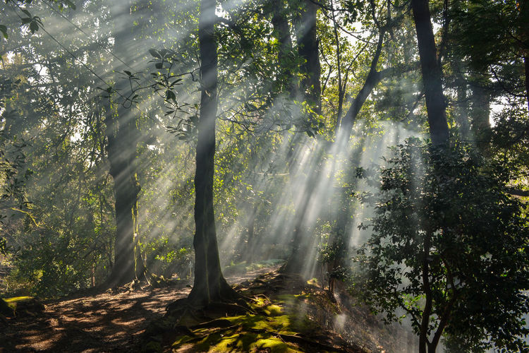 Batumi Day Idyllic Lens Flare Lush Foliage Nature Nature Nature Photography Nature_collection No People Non-urban Scene Outdoors Remote Scenics Sky Sun Sunbeam Sunlight Sunny Tourism Tranquil Scene Tranquility Tree Tree Trunk WoodLand