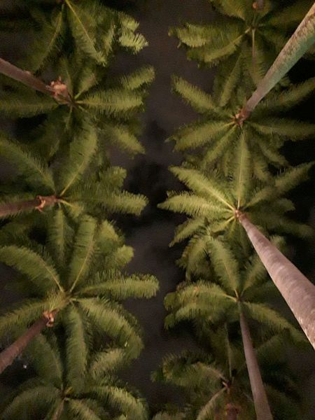 L.A.P.A... Brazil Rio De Janeiro EyeEmNewHere J7primephotography HUAWEI Photo Award: After Dark Tree Marijuana - Herbal Cannabis Cannabis Plant Leaf Close-up Plant Green Color Sky