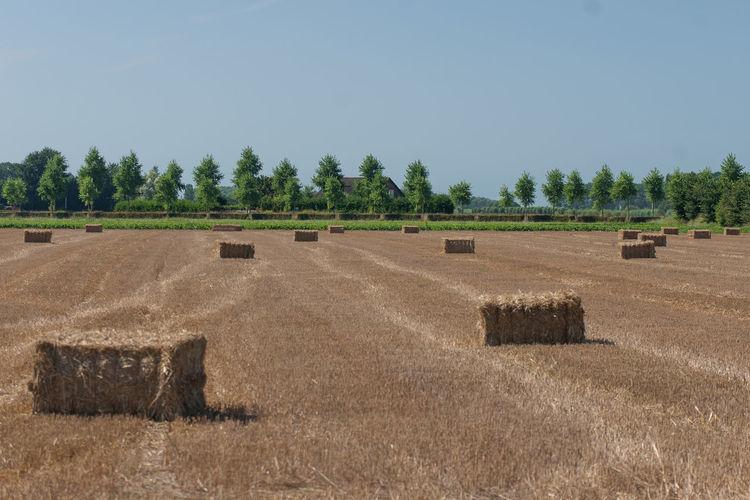 EyeEm Market © Getty Images Stacks  Strow Farmland Cultivated Land EyeEm Premium Collection Zeeuws Vlaanderen Zeeland  The Netherlands